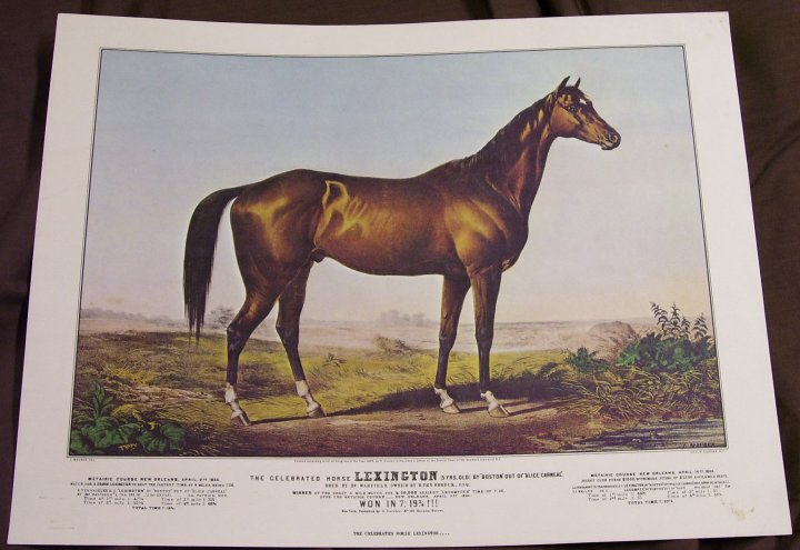 Art Print The Celebrated Horse Lexington, reprint from 1968